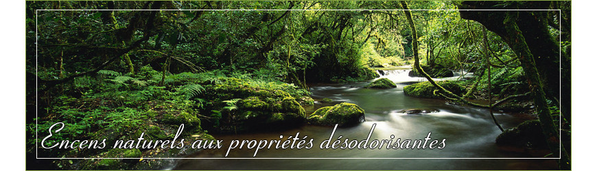 Désodorisant : Encens naturel et pur aux propriétés désodorisantes !